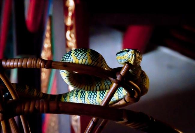 Змеиный храм Лазурного Облака 3
