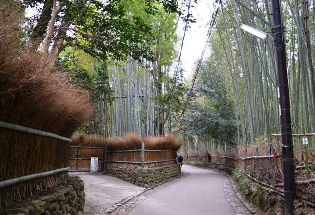 Бамбуковая роща Сагано 2