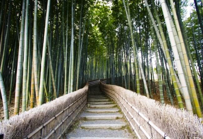 Бамбуковая роща Сагано 3