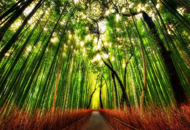 Бамбуковая роща Сагано 5