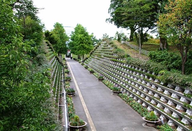 Парк цветов Тоттори 4