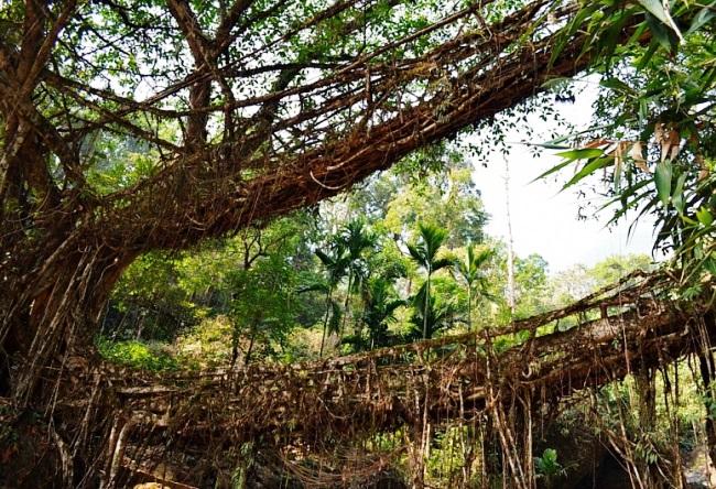 Мосты которые сооружает сама природа 5