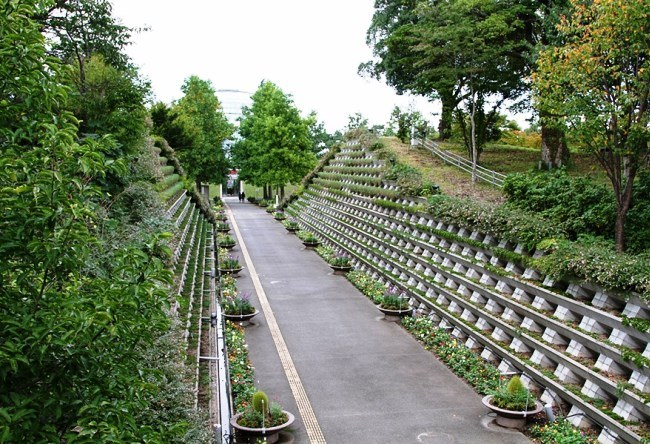 Tottori Flower Park 4