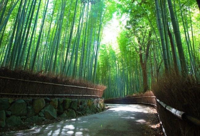 Sagano Bamboo Grove 4