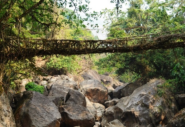 Bridges who is building the nature 2