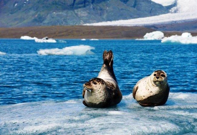 Ekyulsaurloun Lake is Glacier lagoon in Iceland 3