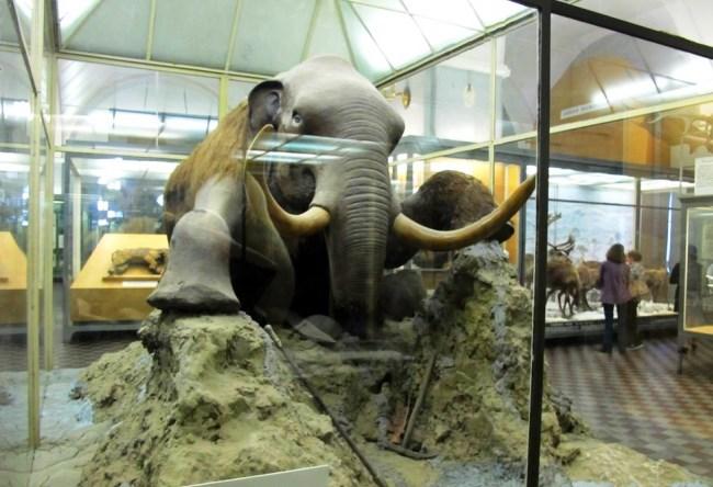Зоологический музей в доме номер один 2