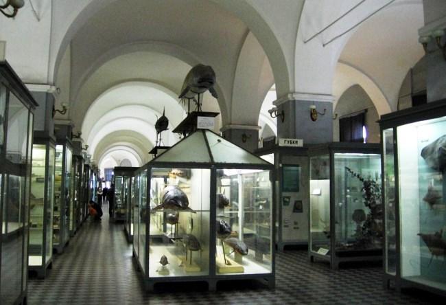 Зоологический музей в доме номер один 3