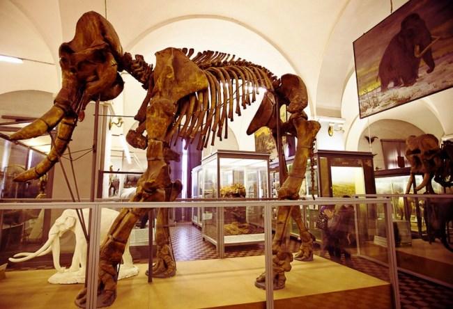 Зоологический музей в доме номер один 4