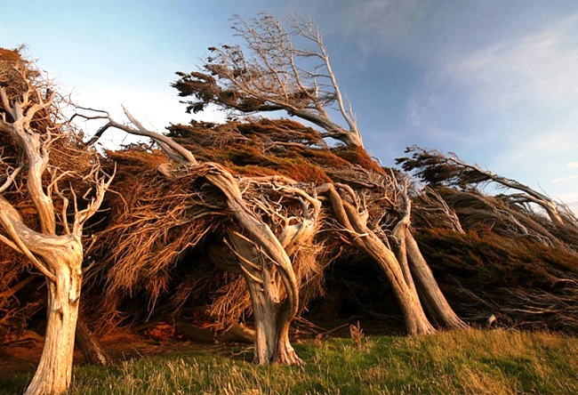 Unusual trees in New Zealand 4