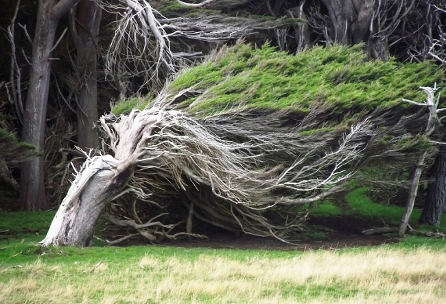 Unusual trees in New Zealand 5