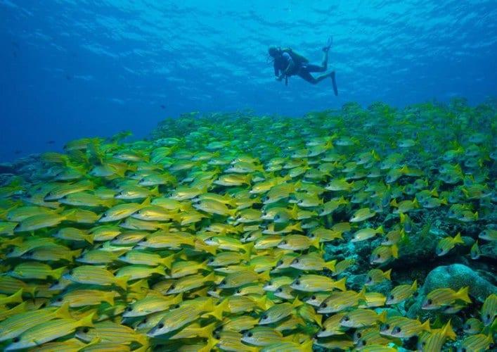 Мальдивы 3