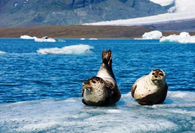 Ледниковая лагуна Исландии  озеро Екюльсаурлоун 3