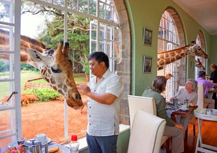 Завтрак с жирафами 3