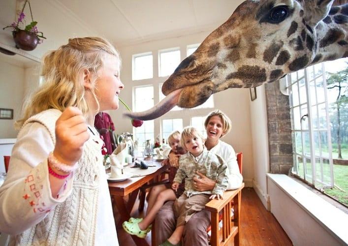 Завтрак с жирафами 5