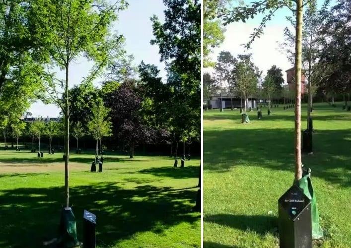 Парк Поющих деревьев 2