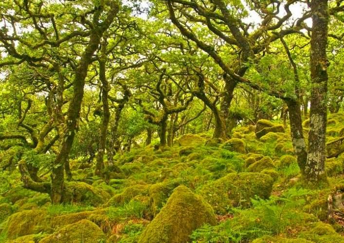 Лес Вистмэна 2