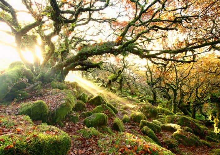 Лес Вистмэна 3