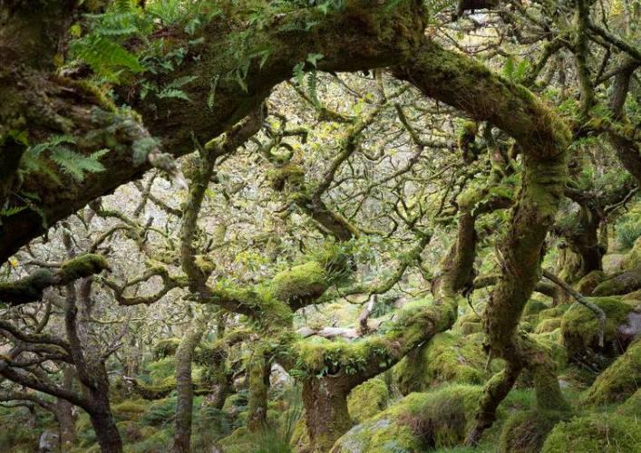 Лес Вистмэна 5