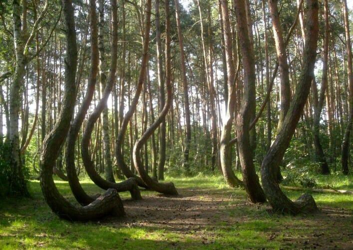 Лес Хоя Бачу 2