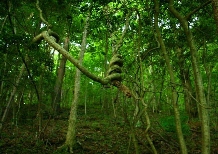 Лес Хоя Бачу 4