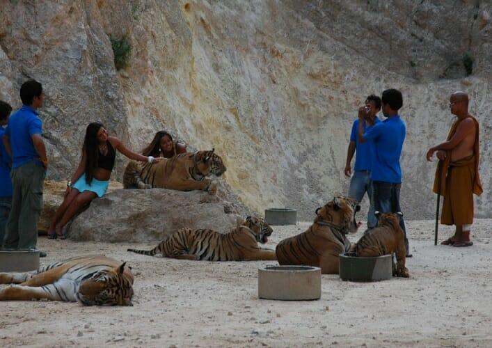 Храм тигров 4