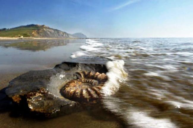 Аммонитовый берег близ Лайм Режис 4