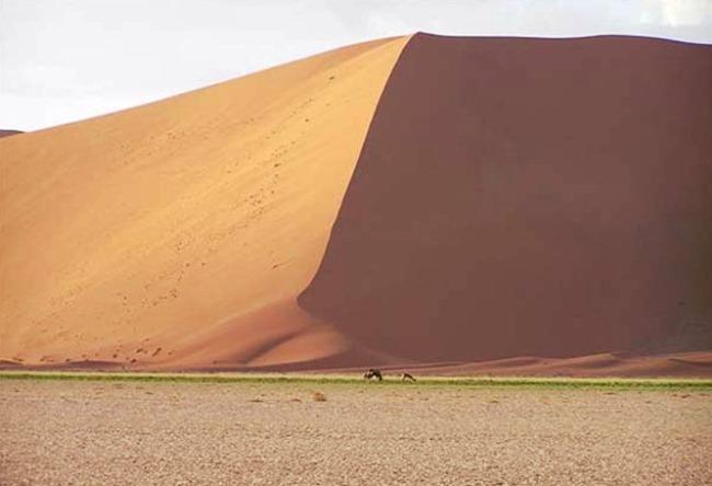 Namib is a desert elephants and fog 4