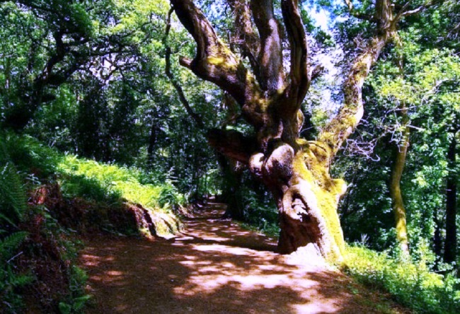 Gardens of Heligan in Cornwall 3