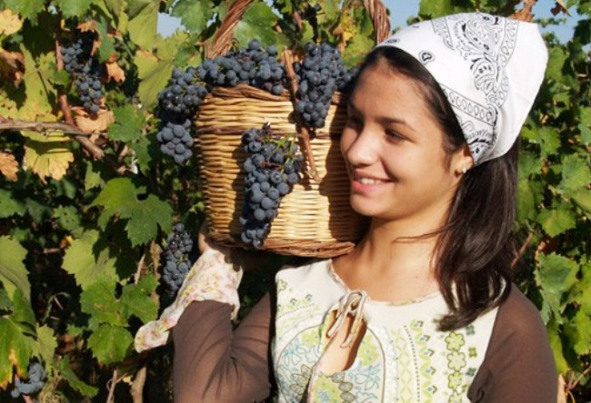Wine tourism in Italy 3