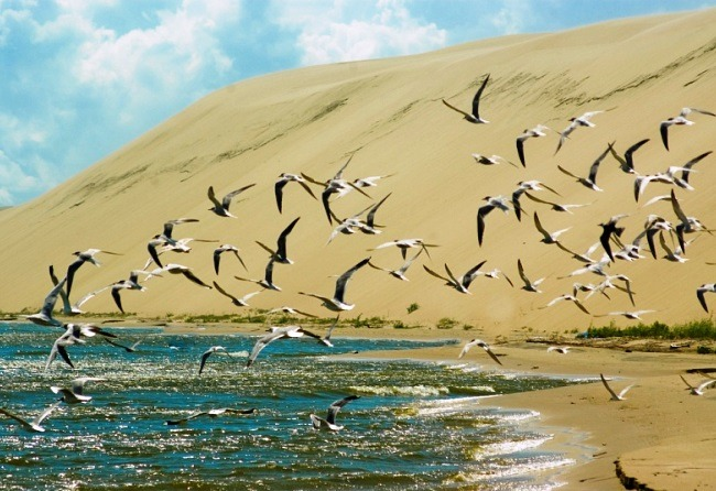Amazing nature of the Curonian Spit 4