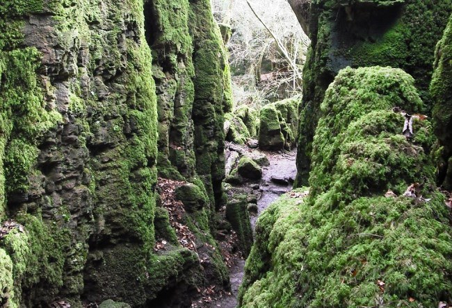 Puzzlewood forest 5
