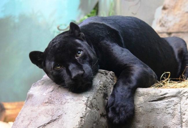 Самый старый зоопарк России 3