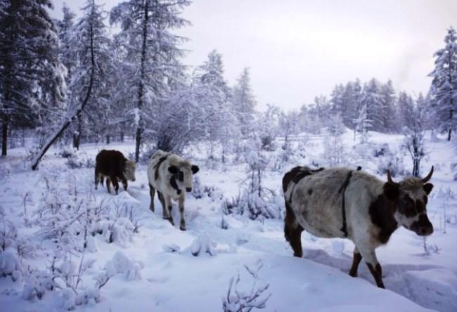 Абсолютный полюс холода  поселок Оймякон 4