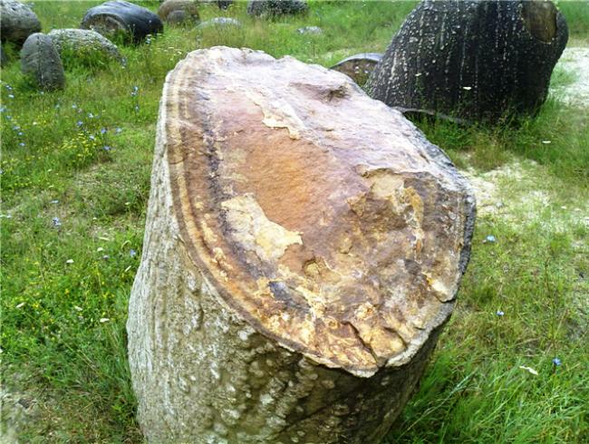 Трованты  живые камни Румынии 4