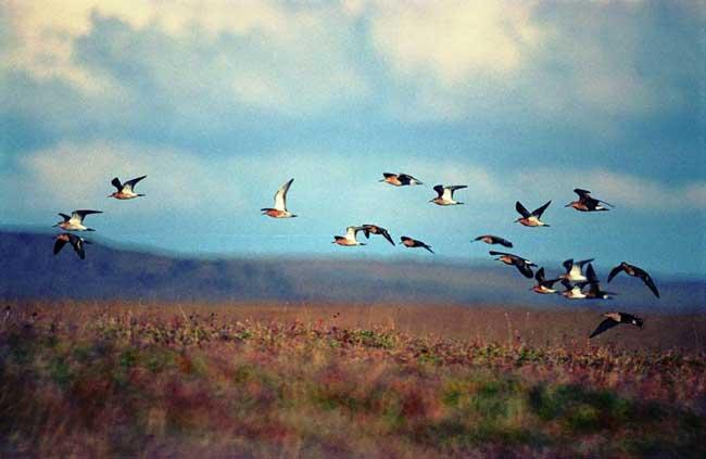 0030-111-Great-Arctic-Reserve