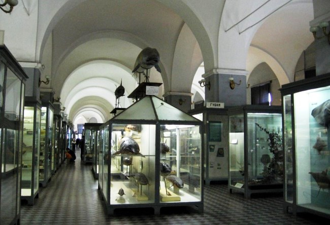 Zoological Museum at number one 3