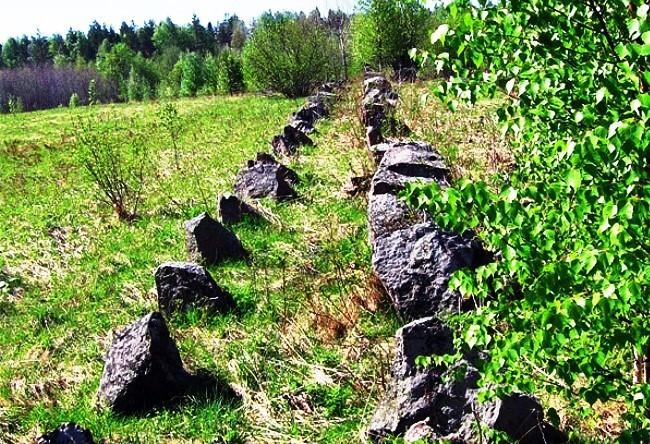 Mystic alder wilderness 2