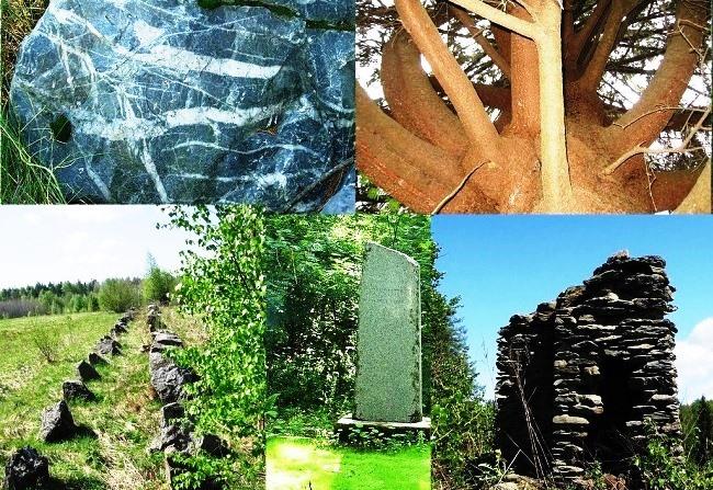 Mystic alder wilderness 3
