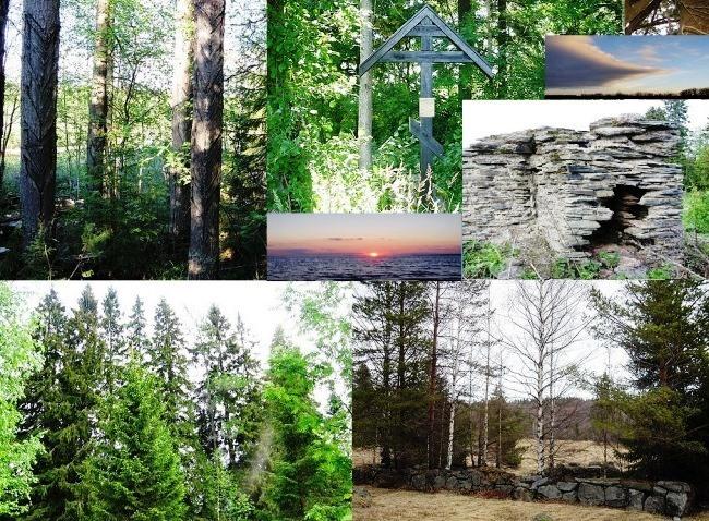 Mystic alder wilderness 5
