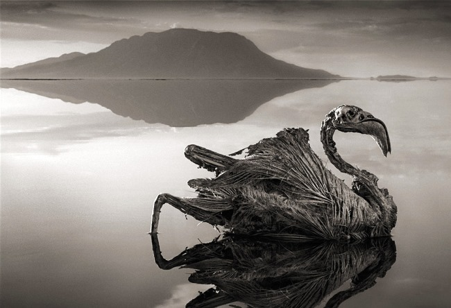 Red Lake Natron in the family Gargony 3
