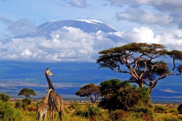 Тур по заповедникам и национальным паркам Африки