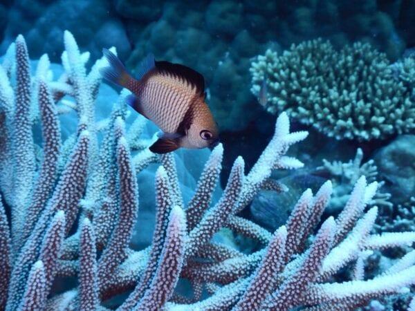 Дайвинг в Большом Барьерном рифе. Незабываемый опыт.