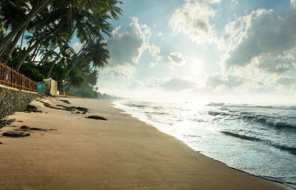 Шри-Ланка: поездка самостоятельно