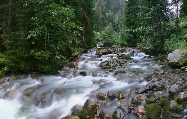 kavkaz-gruziya-les-derevya-reka