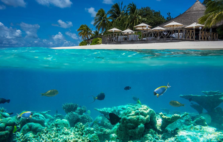 markus-stauffer-maldivy-okean-more-tropiki-zontiki-ryby-dno