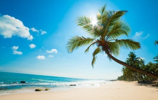 palmy-pliazh-okean-kariby-caribbean-island