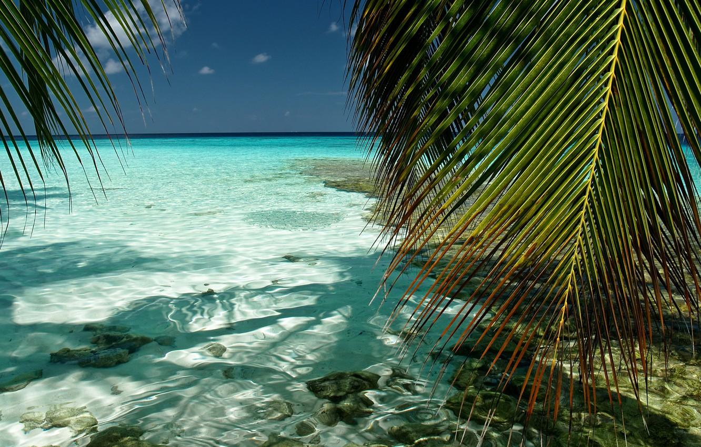 priroda-maldivy-yuzhnyy-male