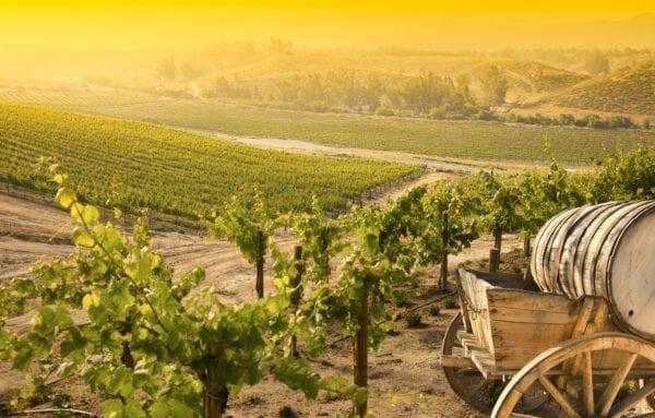 Итальянское вино – где лучше?