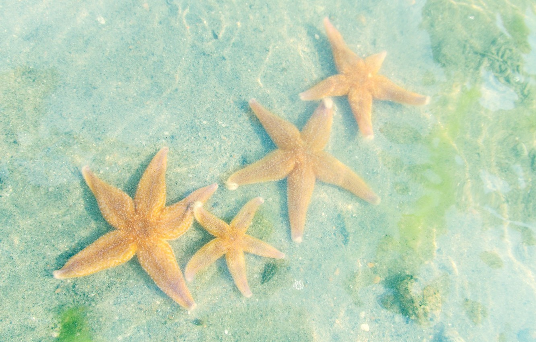 morskie-zvezdy-beloe-more-voda